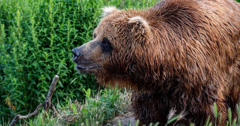 Best Bear Sprays of 2019 – Keep Bear Away