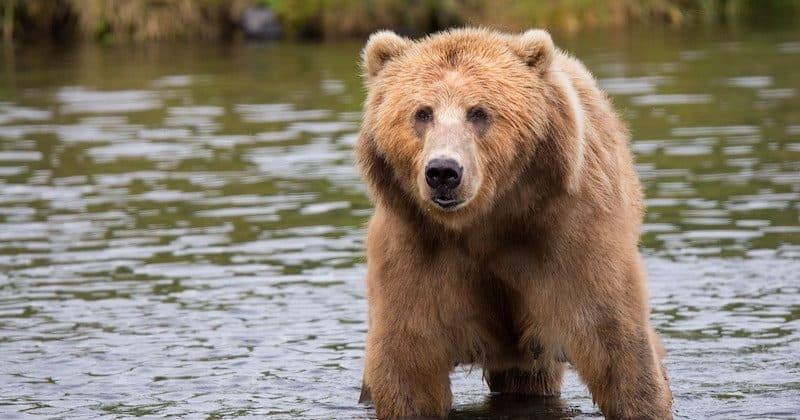 Best Bear Horn or Whistle Reviews