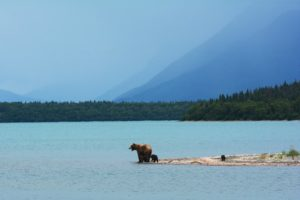 camping in alaska with bears