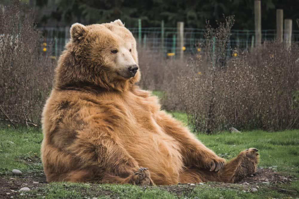 do air horns work on bears