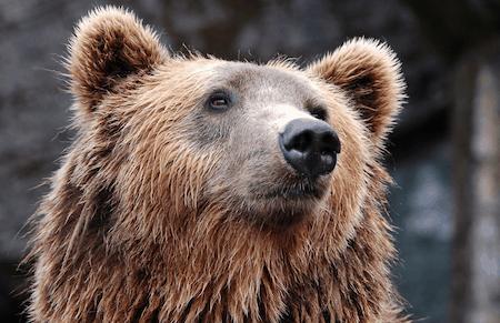 bear smelling