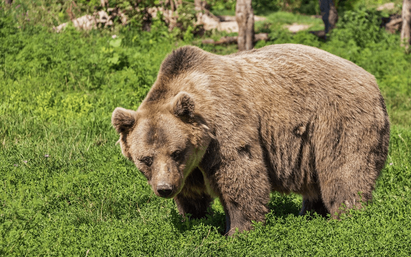 bear proof your property